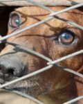 Hva skjer med hunden ved samlivsbrudd?